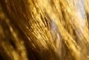 Stresshormone in den Haare erlauben Rückschlüsse auf das Herzinfarktrisiko.